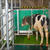 Read more about No bull: Scientists potty train cows to use 'MooLoo'