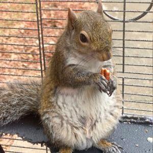 Fugitive 'attack squirrel' owner arrested in Alabama chase