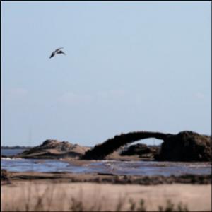 BP oil spill cash rebuilds eroded Louisiana pelican island