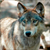 Read more about US tribes demand emergency protection for wolves