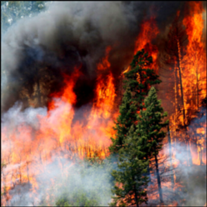 Report: Work to reduce wildfire risks has economic benefits