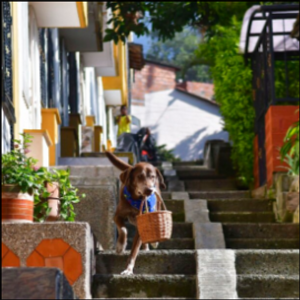 Doggy deliveries help Colombians shop during pandemic