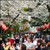 Read more about Japan's famous cherry blossoms bloom early as climate warms