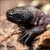 Read more about Endangered venomous Mexican lizards hatch at zoo in Poland