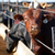 Read more about Unhappy with prices, ranchers look to build own meat plants