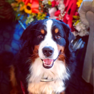 NYC funeral home dog is 1 millionth 'canine good citizen'
