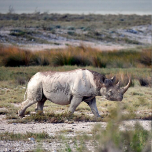 From tusks to tails, nations eye trade in endangered species