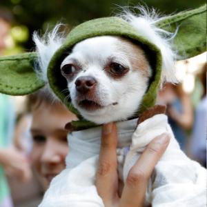 Doggy Con: a pop culture convention for furry fanatics