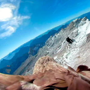 Bad weather grounds eagle set to fly filming Alpine glaciers