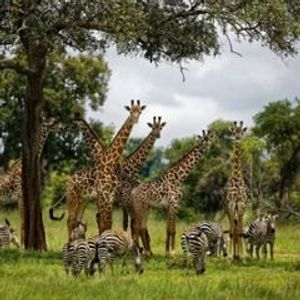 UN report: Humans accelerating extinction of other species
