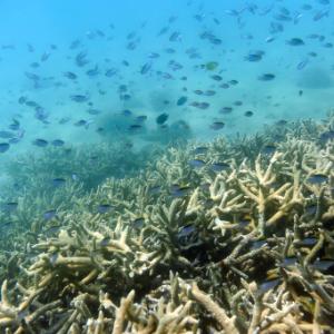 Australia lowers Great Barrier Reef outlook to 'very poor'