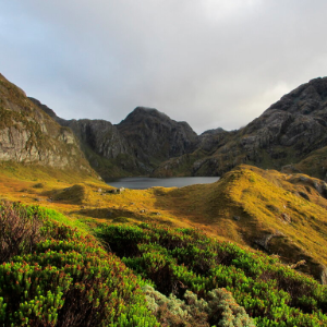 New Zealand passes law aimed at combating climate change