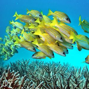 MCFARLING: Science fiction prescriptions for dying coral reefs