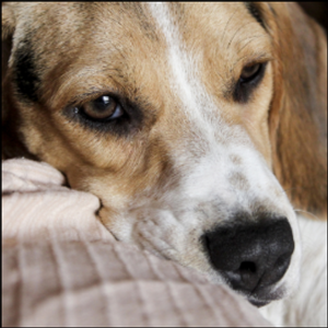 NEWKIRK: Think your lockdown is unpleasant? Imagine how your dog feels every day