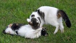 prohibida venta de cachorros de perros y gatos en el Reino Unido Reino