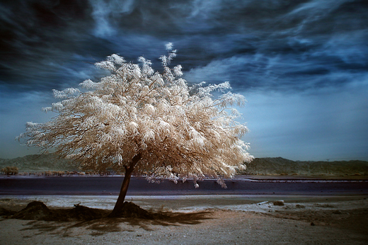 50 Beautiful Examples of Tree Photography | The JotForm Blog
