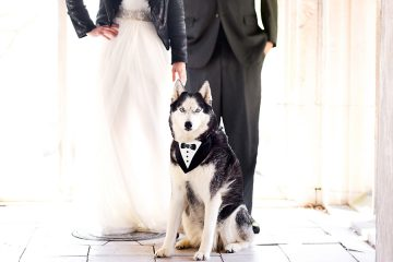 Husky with Bride and Groom