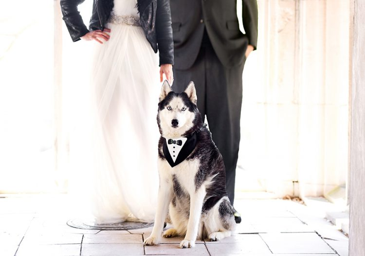 "3 ""Pawsome"" Ways To Include Your Pet In Your Wedding Celebrations"