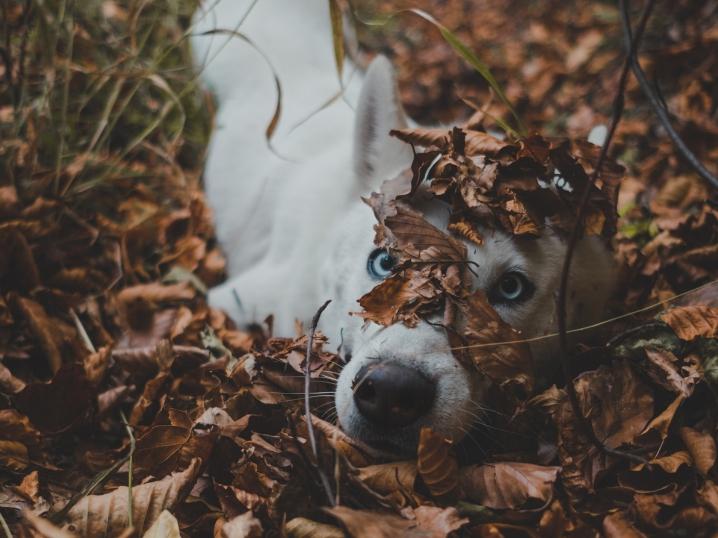 5 Tips for Incredible Fall Photos
