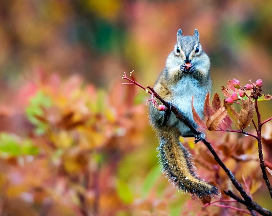 chipmunk in a tree