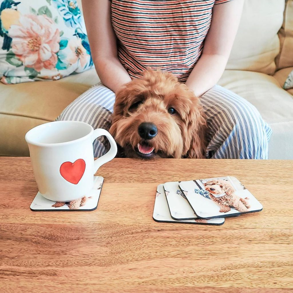 Dog looking at coffee table with coaster