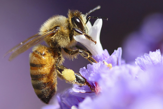 Protect Bees from Toxic Pesticides and Save Our Food Supply