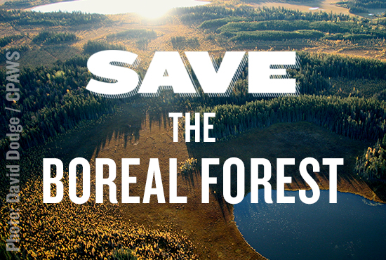 help fight climate change by saving the boreal forest nrdc