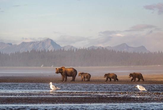 Aljaska - Page 2 Aa-2995-alaska-wildlife