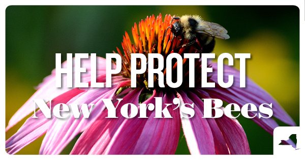 Protect NY Bees for National Honey Bee Day | NRDC Action Fund