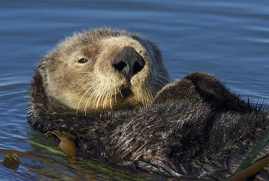 Photo of otter.