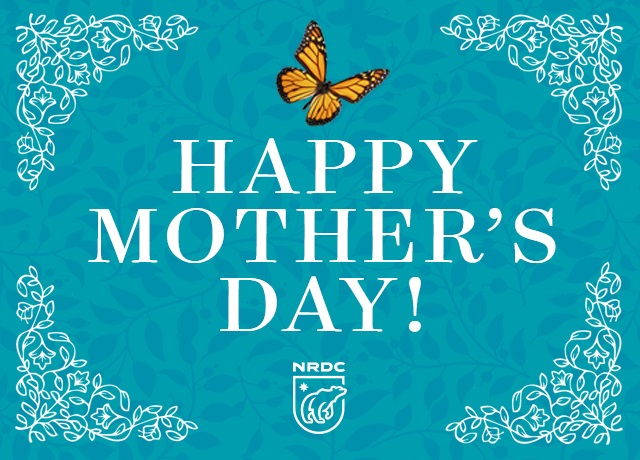 Milkweed for monarchs a mothers day gift that makes an impact nrdc if youd prefer the mother of your choice to receive the ecard on mothers day then just send the ecard to yourself now and forward it to her on sunday solutioingenieria Images