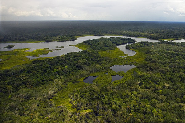 Jatuncocha Lagoon in the Yasuní National Park in the Ecuadorian Amazon