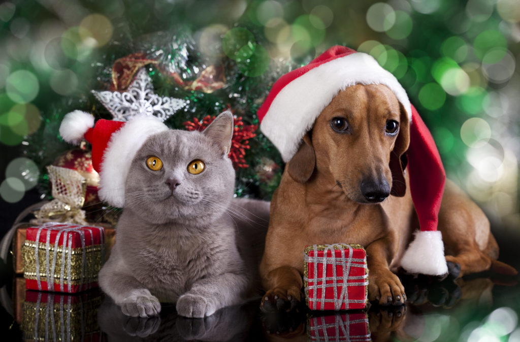 Christmas Cats & Dogs HD Wallpapers New Tab Theme