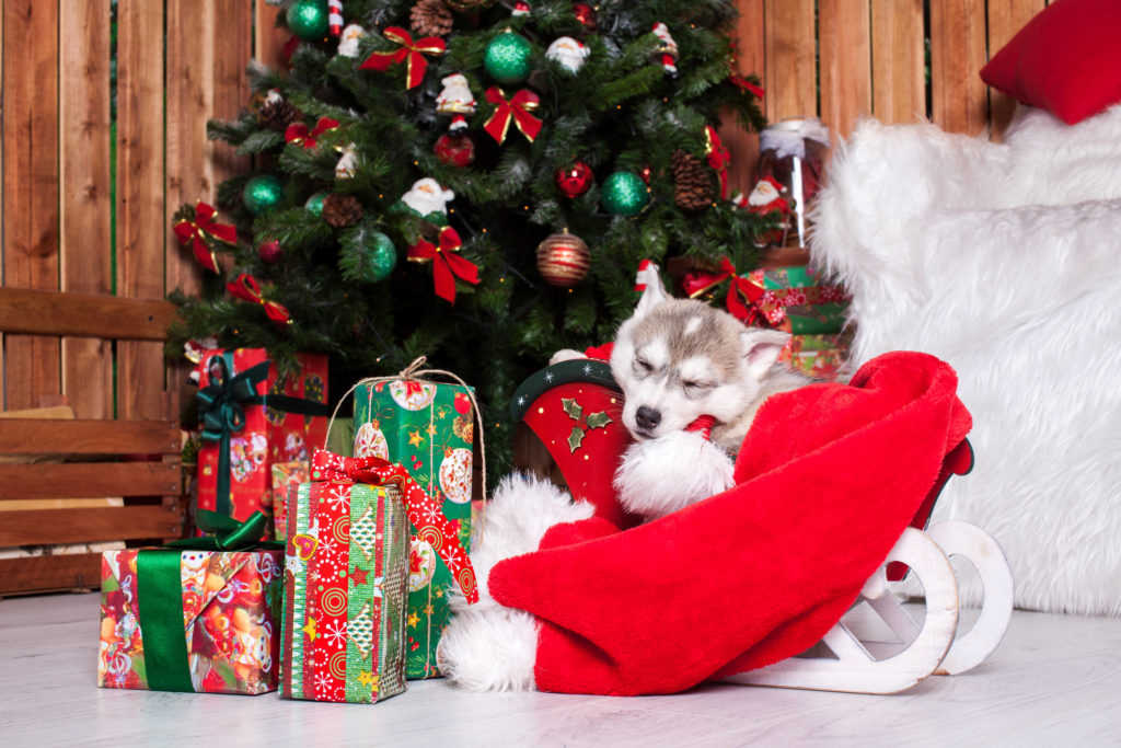 Christmas Puppies HD Wallpapers New Tab Theme