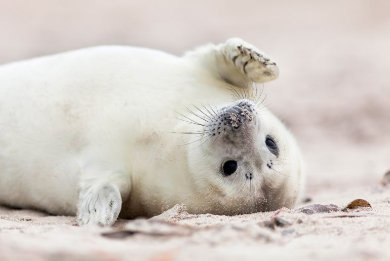 cute baby seal on the beach