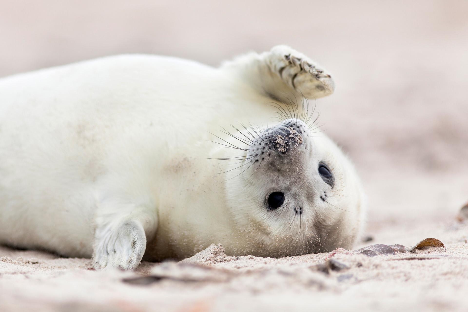 cute baby seal on the beach