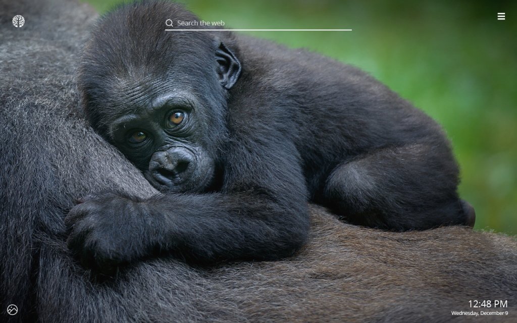 Gorilla HD Wallpaper New Tab Theme