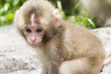 baby monkey playing outdoors