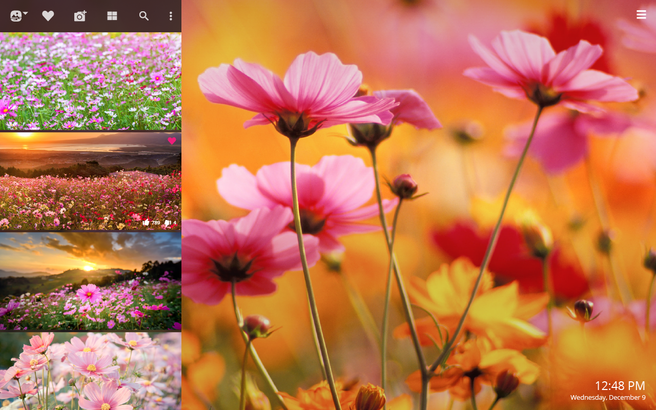 Cosmos Flowers Hd Wallpapers New Tab Impressive Nature