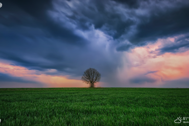 cloudy sky and green tree