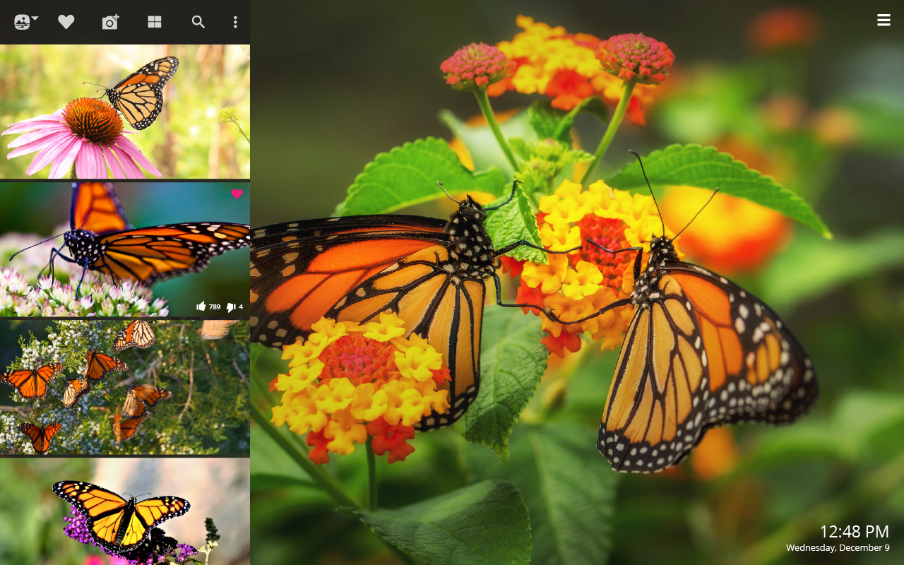 Monarch Butterfly HD Wallpapers New Tab - Impressive Nature