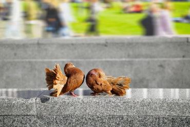 cute pigeons