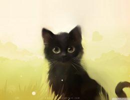 Anime cat