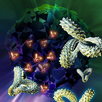Immunotherapies Advance to Treat More Cancers