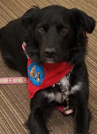 Darla the therapy dog