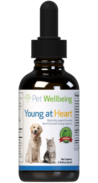 Young at Heart for Cat Heart Disease by Pet Wellbeing