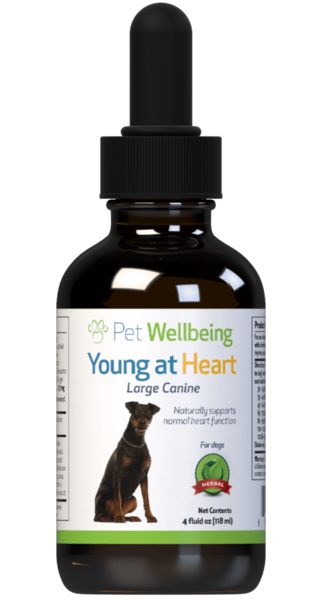 Young at Heart for Dog Heart Disease by Pet Wellbeing