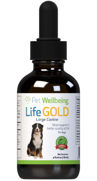 Life Gold – Dog Cancer Support by Pet Wellbeing
