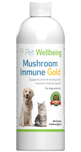 Mushroom Immune Gold for Feline Cancer Support by Pet Wellbeing
