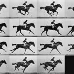 Horse-frames